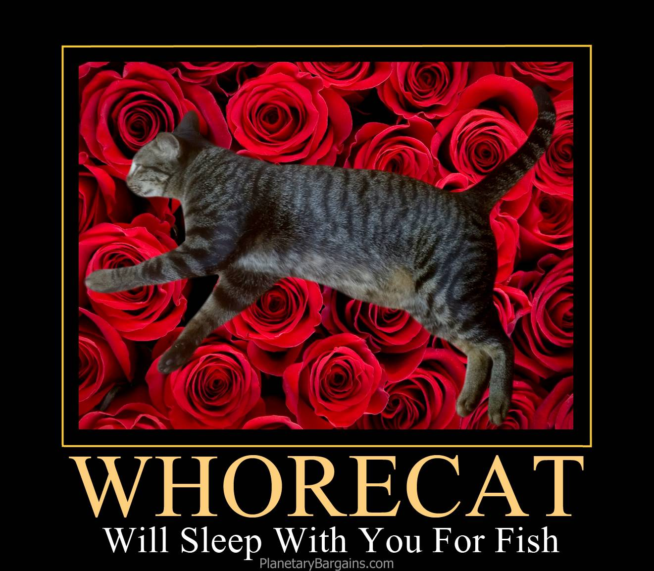 Cat Whore